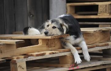 Stray Dogs Kiev 2012 April