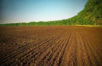 земля поле