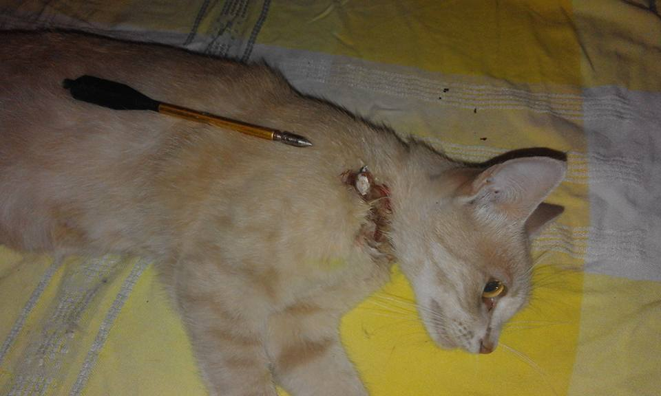 кіт арбалет1