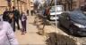 У центрі Чернівців почали висаджувати дерева (відео)